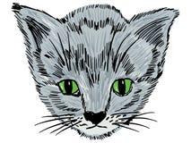 Portrait of kitten Royalty Free Stock Photo