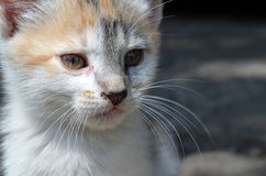 Portrait of the kitten Stock Photography