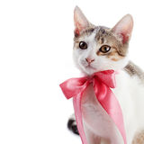 Portrait of a kitten with a pink bow. Stock Photography