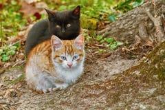 Portrait of Kittens Stock Photo