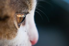 Portrait of kitty with focus on eye stock photos
