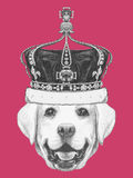 Portrait of Labrador with crown. Hand drawn illustration Royalty Free Stock Photo