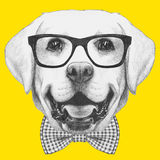 Portrait of Labrador with glasses and bow tie. Hand drawn illustration Royalty Free Stock Image