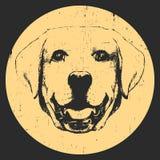 Portrait of Labrador. Hand drawn illustration. Vector Stock Image