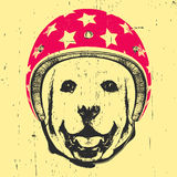 Portrait of Labrador with Helmet. Vector Stock Photos