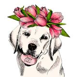 Portrait of labrador retriever dog with egg and tulip crown. Happy Easter. Hand drawn colored vector illustration. Engraved detailed art. For Easter greeting Royalty Free Stock Photo