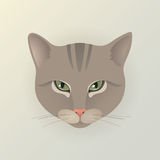 Portrait of a lady cat. Portrait of a lady striped cat. Cute characters cat in japanese style. Dodgy cat. Angry cat. Flat minimal design style with pastel gray Stock Photos