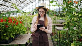 Portrait of lady using tablet in greenhouse touching screen counting plants. Portrait of pretty lady in apron and hat using tablet in greenhouse touching screen stock video footage