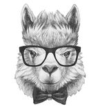 Portrait of Lama with glasses and bow tie. Hand drawn illustration Royalty Free Stock Photos