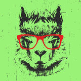 Portrait of Lama with glasses. Hand drawn illustration. Vector Royalty Free Stock Photo