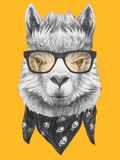 Portrait of Lama with glasses and scarf. Hand drawn illustration Stock Photo
