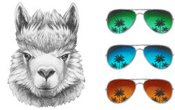 Portrait of Lama with mirror sunglasses. Hand drawn illustration Royalty Free Stock Images