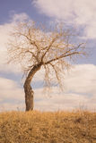Portrait Landscape of a Bent Tree in the Grassland. Portrait landscape of a bare bent tree in the grassland  with a cloudy sky Royalty Free Stock Photography