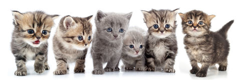 Portrait of large group of kittens against white background Royalty Free Stock Photo