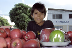 Portrait of Latino boy with apples, child labor Royalty Free Stock Images