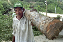 Portrait of Latino senior with firewood on shoulder stock image