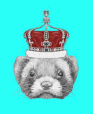 Portrait of Least Weasel with crown. Stock Photos