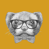 Portrait of Least Weasel with glasses and bow tie. Royalty Free Stock Image