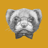 Portrait of Least Weasel with glasses and bow tie. Stock Photo