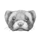 Portrait of Least Weasel. Royalty Free Stock Photos