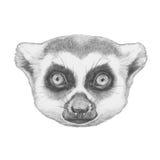 Portrait of Lemur. Hand drawn illustration stock illustration