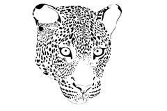 Portrait of leopard Stock Image