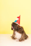 Portrait Lhasa apso Royalty Free Stock Photography