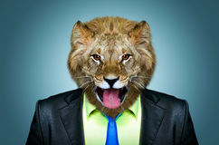 Portrait of a lion in a business suit. On a blue background Stock Photo