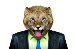 Portrait of a lion in a business suit. Isolated on a white background Royalty Free Stock Photos