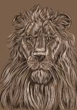 Portrait of a lion, color vector illustration