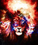 Portrait lion in cosmic space. Eye contact. Stock Photography