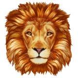 Portrait of Lion. vector illustration