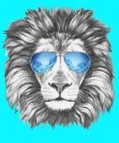Portrait of Lion with mirror sunglasses. Stock Photo