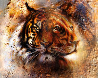 Portrait lion and Tiger face, profile portrait, on colorful abstract feather pattern background. Abstract color collage with spots Stock Images