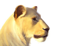 Portrait of a lion. On a white background / Digital painting Royalty Free Stock Photos
