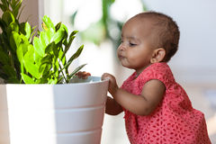 Portrait of little African American little girl - Black people Stock Images