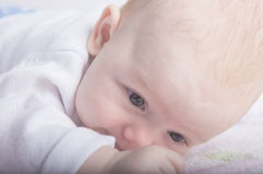 Portrait of a little Baby Royalty Free Stock Photo