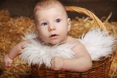 Portrait of little baby in woven basket on pile of straw backgro Stock Photography