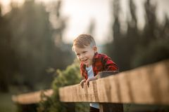 Portrait of a little boy in the evening  park Royalty Free Stock Photography