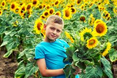 Portrait of a little boy in a field with a flowering sunflower royalty free stock photography