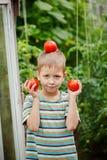 Portrait of little boy holding ripe tomatoes in the greenhouse. Portrait of little boy holding ripe tomatoes in the greenhouse Stock Image