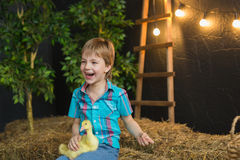 Portrait of a little boy with a little goslings in farm Stock Images
