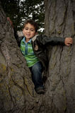 Portrait of little boy siting in tree Stock Photography