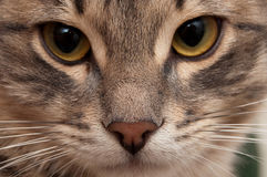 Portrait of a little cat Stock Photo