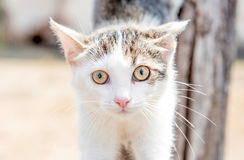 Portrait of little cat. Close up portrait of little cat,selective focus Royalty Free Stock Photography