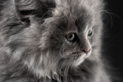 Portrait of little cat isolated on black. Background Stock Photo