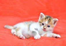 Portrait of a little cat Stock Images