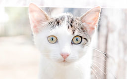 Portrait of little cat. Portrait of little white cat,selective focus Stock Photos