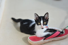 portrait of little cute cat in holiday so funny and happy feelin Stock Photos