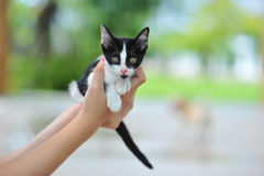 portrait of little cute cat in holiday so funny and happy feelin Stock Image